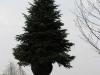 zahradnicke-prace-stromy0020