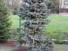 zahradnicke-prace-stromy0025