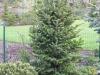 zahradnicke-prace-stromy0026