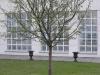 zahradnicke-prace-stromy0027